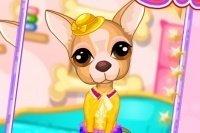 Chihuahua Versorgen