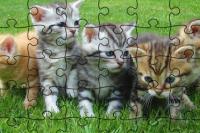 Katzen-Puzzle